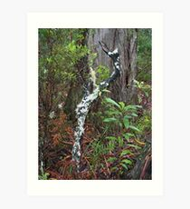 Barrington Tops Tree Scape Art Print