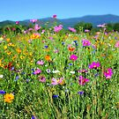 Virginia's Blue Ridge in Bloom by Cecilia Carr