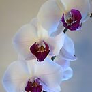 orchid2 by lins