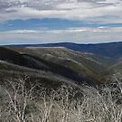 Mt Hotham high summer  by Roger Neal