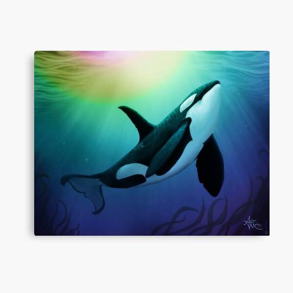"""The Dreamer Ascends"" by artist Amber Marine ~ (Copyright 2015) ~ Orca Art / Killer Whale Digital Painting Canvas Print"