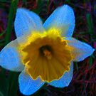 Daffodil From Outer Space by Linda Miller Gesualdo