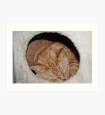 rusty snoozing in his cat tree box Art Print