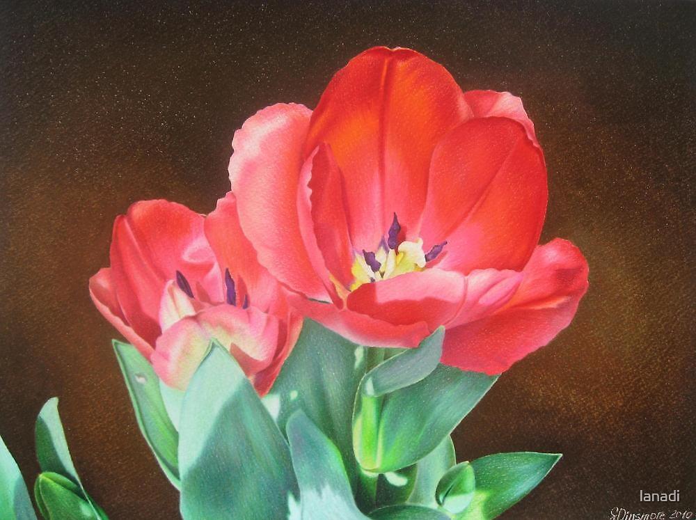 Tulips - Red Silk by lanadi