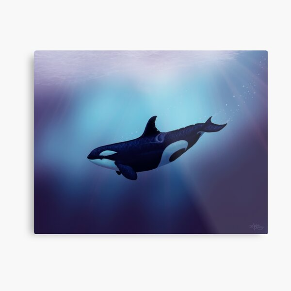 """""""Lost in Fantasy"""" by Amber Marine ~ orca / killer whale art, © 2015 Metal Print"""