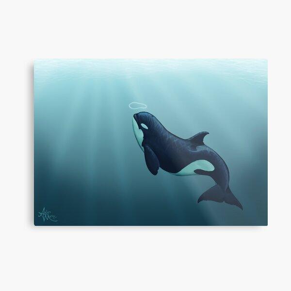 """Subantarctic"" by Amber Marine, type D orca art, © 2014 Metal Print"