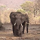 THREE IVORY CARRIERS - THE AFRICAN ELEPHANT – Loxodonta africana by Magriet Meintjes