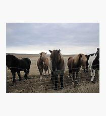 Icelandic Horses Photographic Print