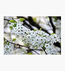 White Flowers Photographic Print