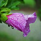 Blooming Rose of Sharon by Susan Blevins