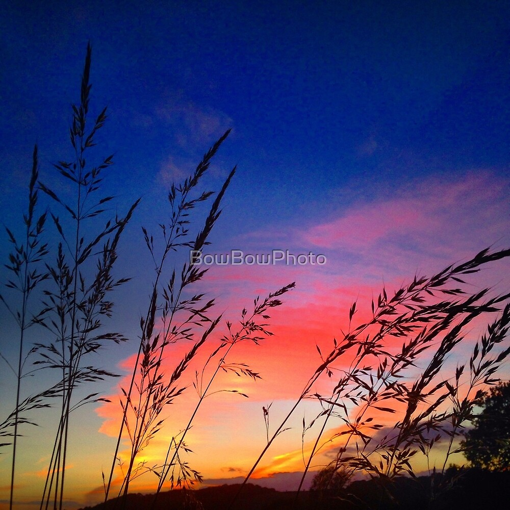 Glorious grass  by BowBowPhoto