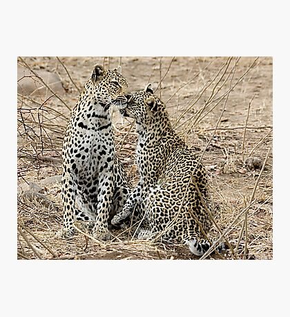 Mother And Daughter Leopards - South Africa Photographic Print