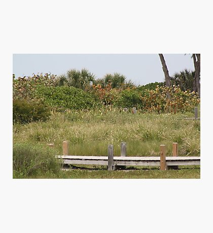 Captivating Captiva Photographic Print