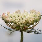 Prairie Lace by Melonie Wallace