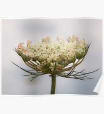 Prairie Lace Poster