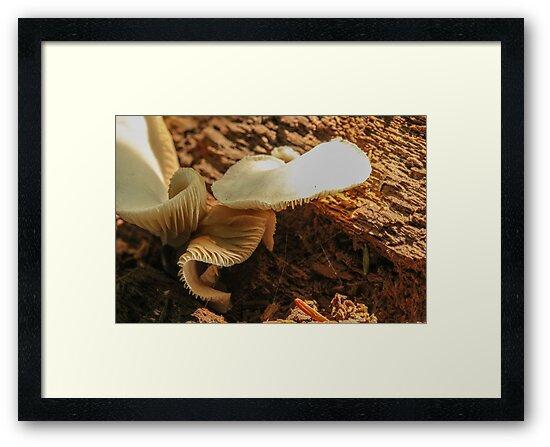 Mushroom on Log 2 by Gary Horner