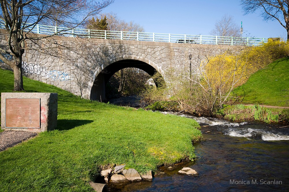 River Herring in Plymouth, MA by Monica M. Scanlan