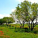 Color pop - Marion, TX by AARose
