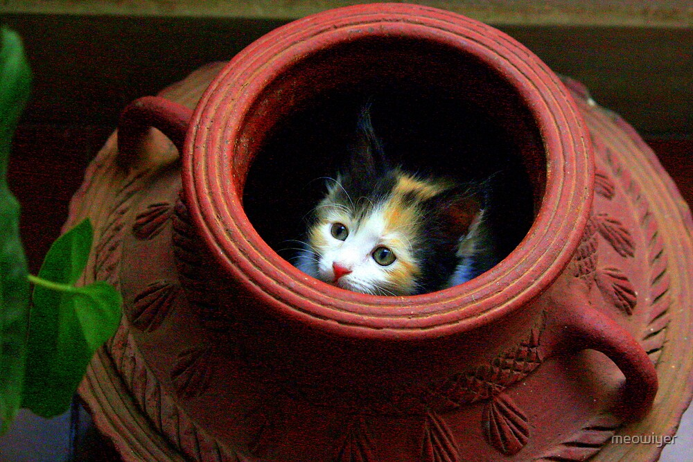 Would you like your Sushi in a Pot? by meowiyer