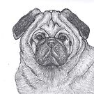 Pug in Charcoal by SKNickel
