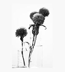 MIFGS - carnations Photographic Print