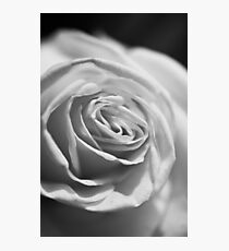 MIFGS - rose Photographic Print