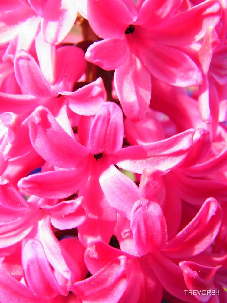 Pink Florets by TREVOR34