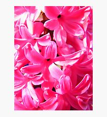 Pink Florets Photographic Print