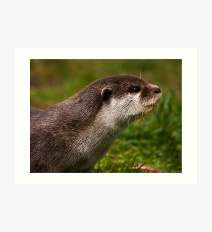 Otter Profile Art Print