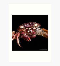 Crab: A Portrait 2 Art Print