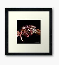 Crab: A Portrait 2 Framed Print