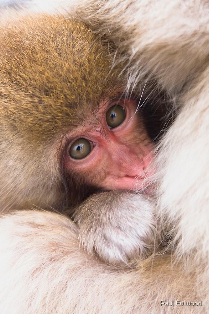 Baby Onsen Monkey by Paul Fulwood
