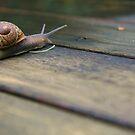 Snails Pace by Charlotte Morison