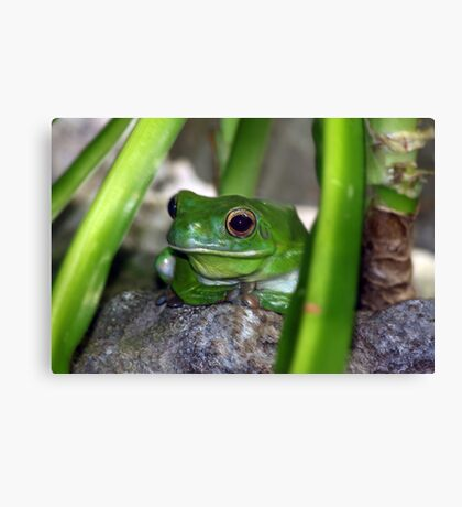 Little Frog Prince Canvas Print