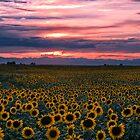 The Field of Dreams by John  De Bord Photography