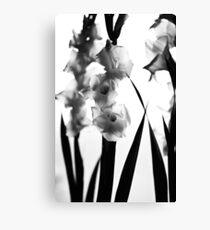 MIFGS - gladioli Canvas Print