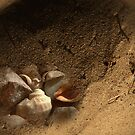 Traces Of Life by DAntas