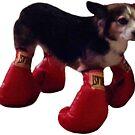 Boxing Corgi by Elisecv