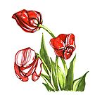 Red tulips growing. Spring flowers by stasia-ch