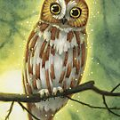 Northern Saw-whet Owl by Elisabeth Alba
