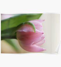 Pastel Pink Poster