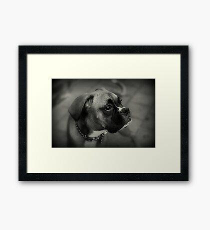 Eine Boxer-Profil ~ Boxer Dogs-Serie Gerahmter Kunstdruck