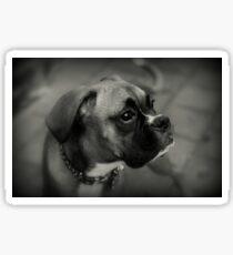 Eine Boxer-Profil ~ Boxer Dogs-Serie Sticker