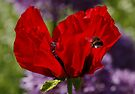 Poppy and Bumble Bee by AnnDixon
