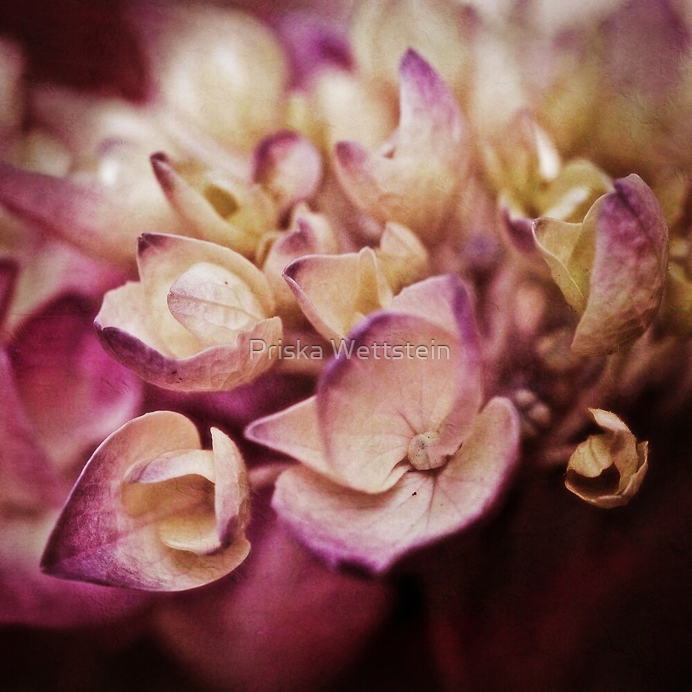 Purple  by Priska Wettstein