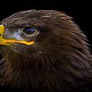 Bird of Prey (2) by Ronald cox