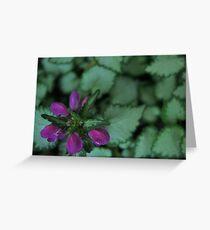 Purple Flower, Silver Leaves - Rancho Cucamonga, CA Greeting Card