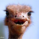 DER OSTRICH - Struthio camelus UND ... * Was hatte ich zum Frühstück oder Mittagessen? von Magriet Meintjes