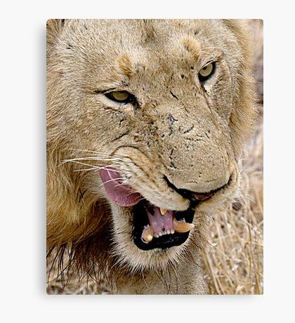 Male Lion Close Up Canvas Print
