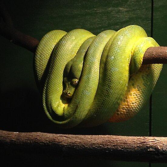 Green Tree Python by Sunnie